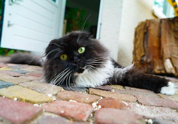 Dierendag – 5 populaire dieren op Instagram